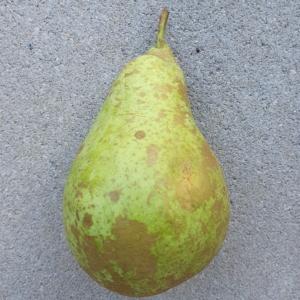 Obst von Bauer
